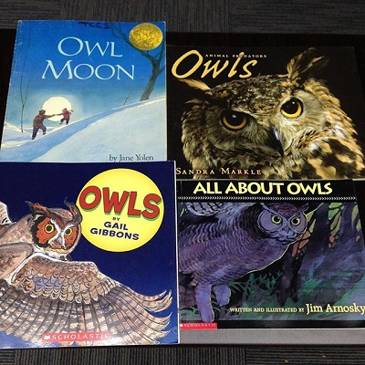 Teaching About Owls