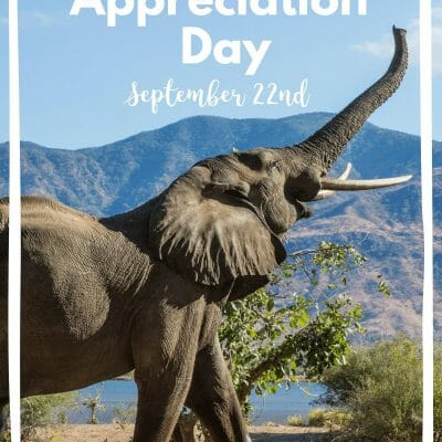 Elephant Appreciation Day in the Classroom