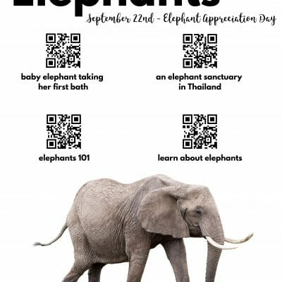 Elephant Videos to share in the classroom