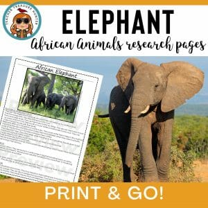 Elephant Animal Research Pages